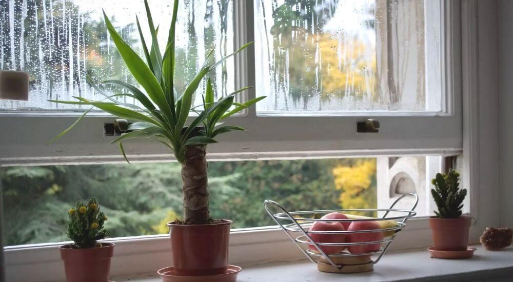 humedad en las ventanas