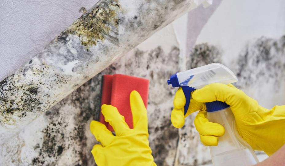 persona quitando el moho con una esponja roja, guantes amarillos y una botella de spray