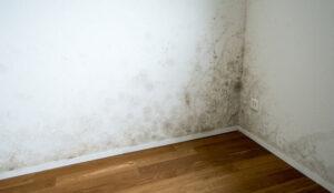 Humedad del sótano: cómo deshacerse de ella para siempre